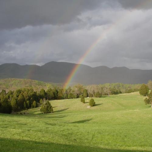 Blue Ridge Vineyard